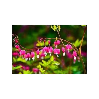宿根花卉如何防寒越冬