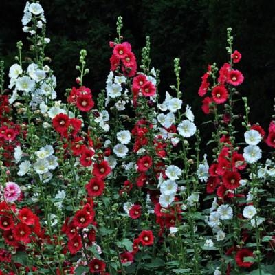 花卉苗木的作用