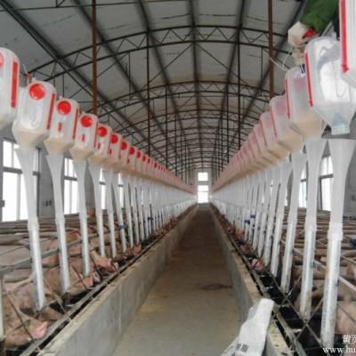 天津现代化养猪设备厂家-泊头开元畜牧厂价订购畜牧自动喂料系统