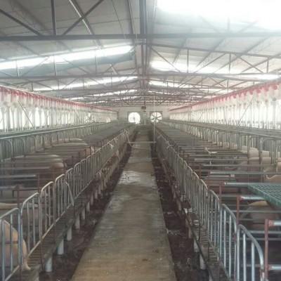 广西自动化喂猪设备加工公司|开元厂价直营养猪自动喂料系统