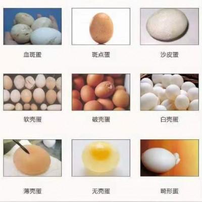 养殖户如何杜绝沙壳蛋