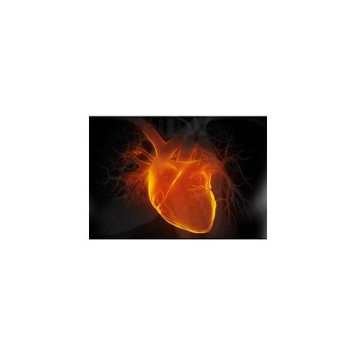 大/小鼠慢性心力衰竭模型|心律失常模型|膜片钳服务|激酶谱