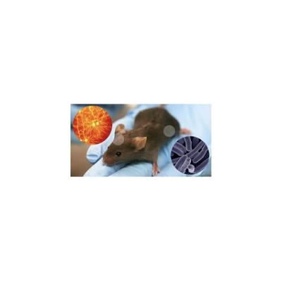 中枢神经系统药理学|疼痛模型|癫痫模型|药物筛选服务